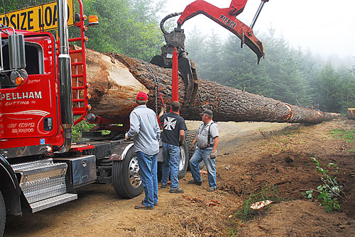 Spar Tree Move